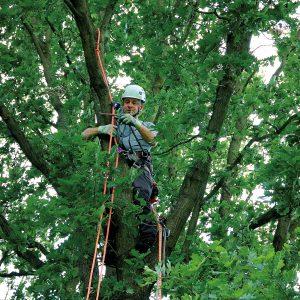 Arbeiten im Baum