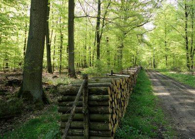 Das Waldgebiet Herrenhassel - unser nächste Nachbar