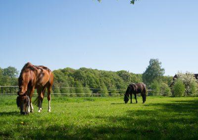 Pferde auf unsere Wiese.