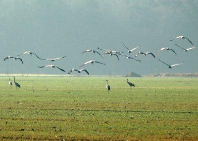 Im Herbst und Frühjahr niederlassen sich viele Wildvögel hier