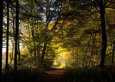und viel Wald prägt die Landschaft