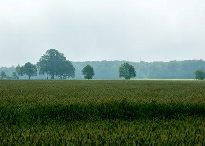 Ausgedehnte Felder und Wiesen...