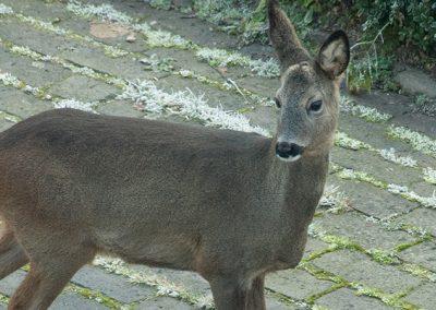 Wildtiere kennen keine Grundstücksgrenzen
